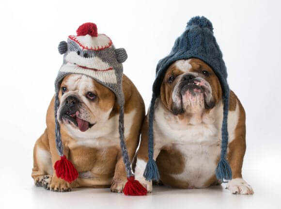 two dogs with hats on