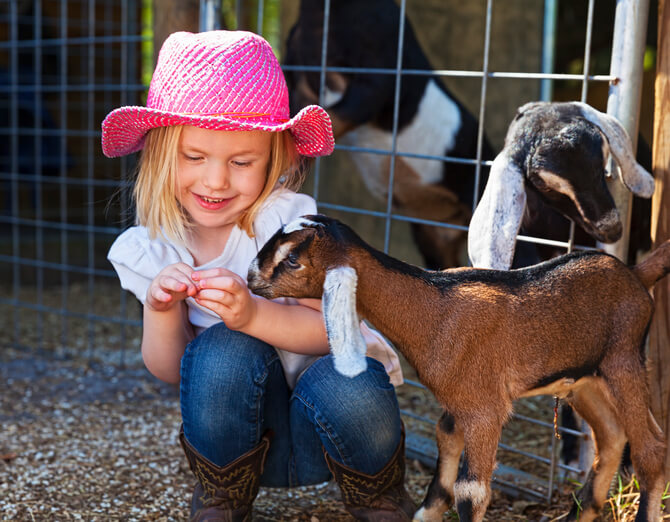a girl playing with a goat