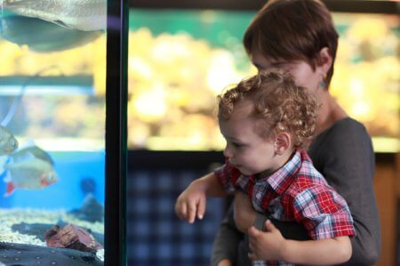 Mother and child are watching the fishes in aquarium