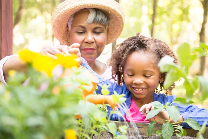 African descent grandmother and grandchild gardening in outdoor vegetable garden in spring or summer season. Cute little girl enjoys planting new flowers and vegetable plants.
